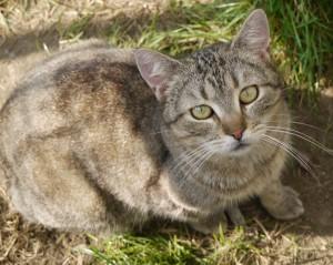 Velké kohouty a pevné kočičky